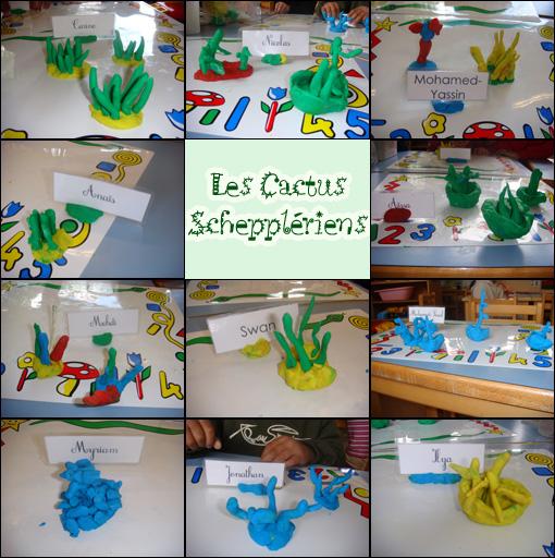 Cactus à Scheppler